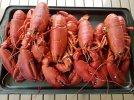 lobstercooling.jpg