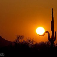 desert spark